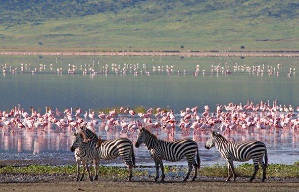 טנזניה וזנזיבר: כמה עובדות מסקרנות