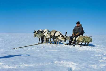 סיביר – בעקבות רועי האיילים בימאל