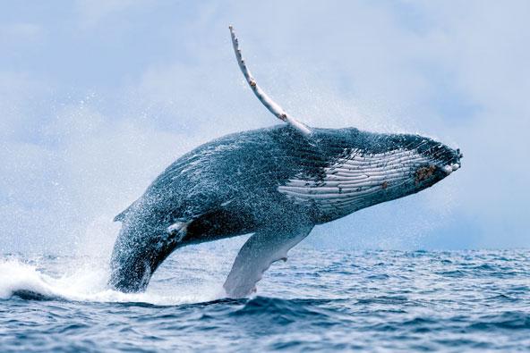 לווייתנים – התצפיות הכי טובות