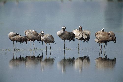 ציפורים חורפות בישראל: העונה החמה