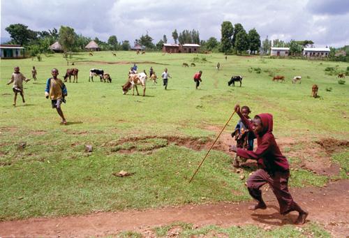 הרעב באתיופיה ב-2003: על בטן ריקה