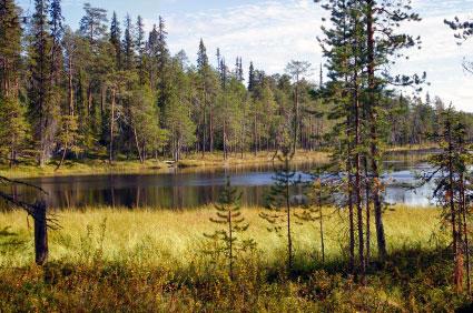 פינלנד – ארץ האגמים והיערות