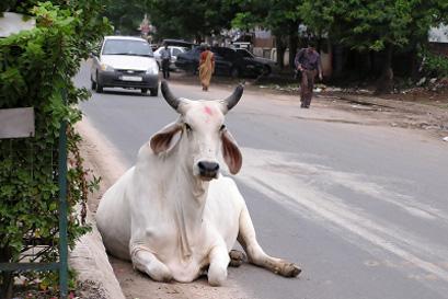 נסיעה בלתי אפשרית – עלילות גורה הנהג בהודו