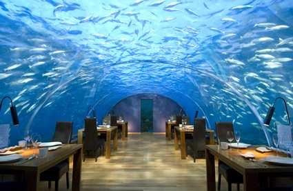 לאכול (עם) דגים – באיים המלדיביים