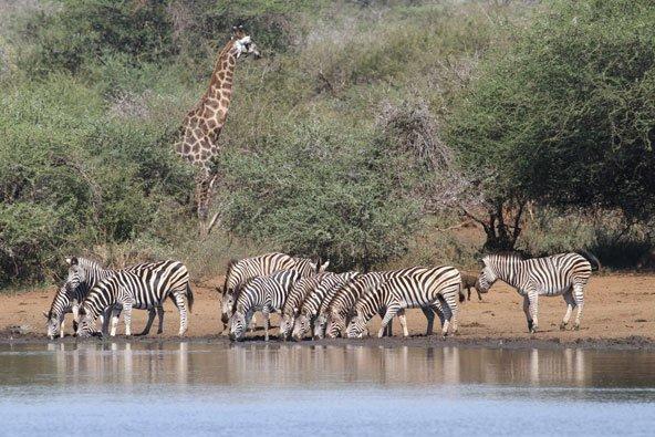 פארקים ושמורות טבע בדרום אפריקה