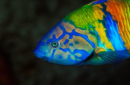 צבע בטבע: תקשורת צבעונית