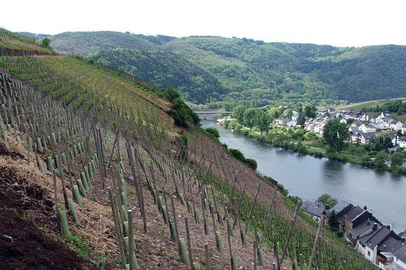 טיולי יין בגרמניה