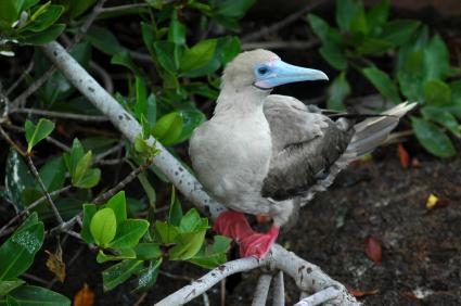 איי גלפגוס והברירה הטבעית