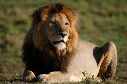 שמורת האריות של אדמסון ובית היתומים לחיות של שלדריק