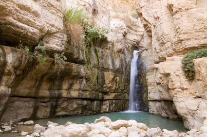 נחל ערוגות: מים בלב המדבר