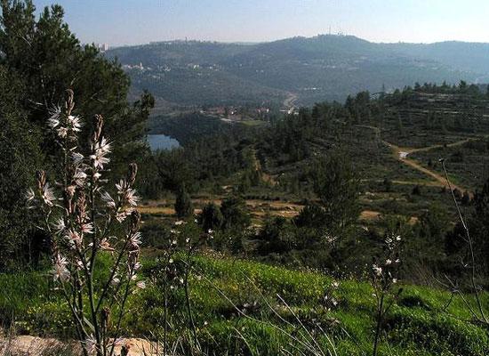 תכנית ספדי: ירושלים של בטון?