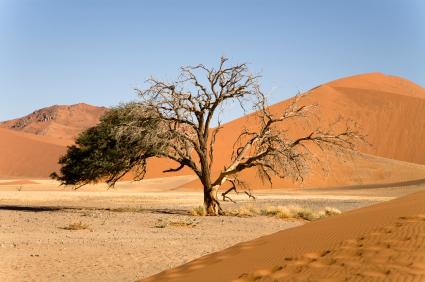 נמיביה – ארץ האוצרות הקורצים