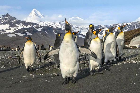 מסע צילום לאנטארקטיקה