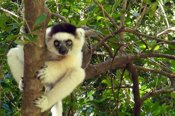 טיול ספארי במדגסקר