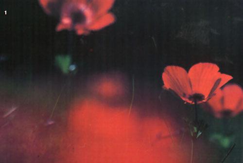 גייל רובין: אמנות וצילום