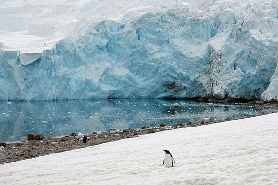 סרטון: צלילת קרח באנטארקטיקה