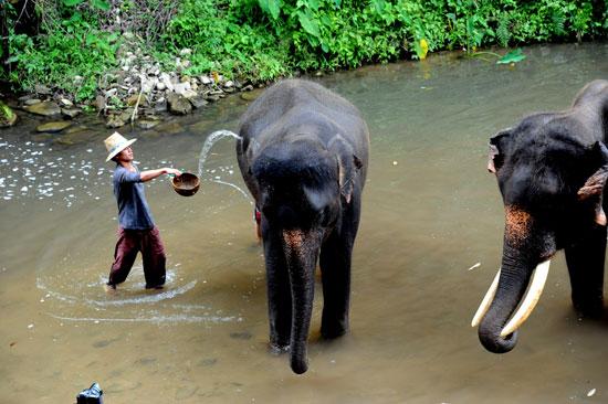 תאילנד – פילים הם חברים
