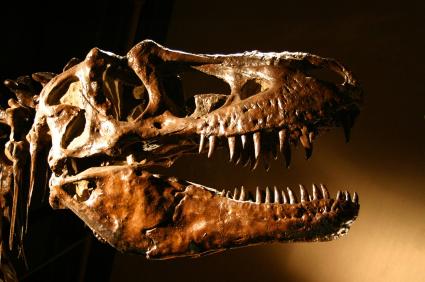 אתר דינוזאורים ענק התגלה בסין