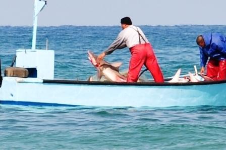 אכיפה מוגברת כנגד ציד כרישים בחופי ישראל