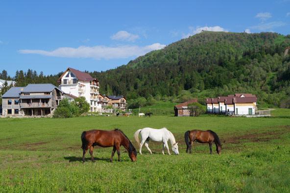 סוסים רועים בכרי העשב ליד בקוריאני