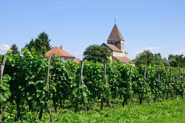 כנסיית סנט ג'ורג' מוקפת בכרמים באי רייכנאו שבחלק הגרמני של האגם