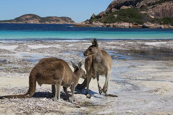 מנפלאות אוסטרליה
