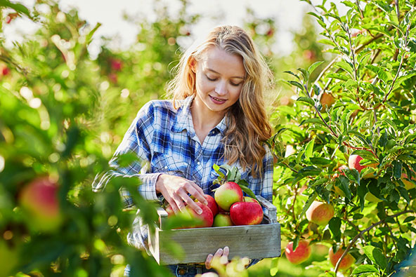 סתיו אירופי – תפוחים, ערמונים ושלכת