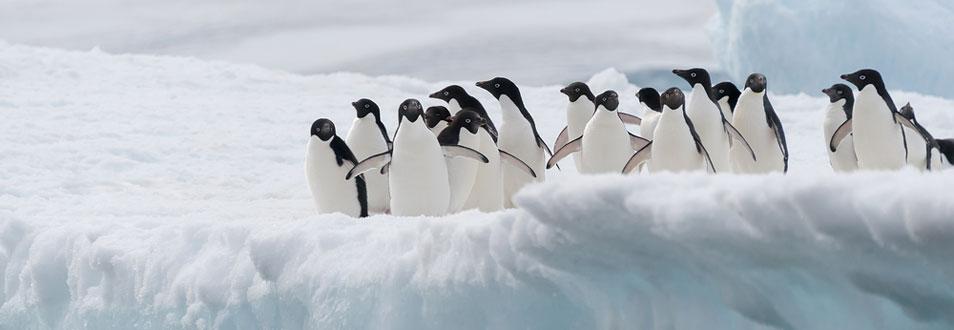 אנטארקטיקה - המדריך המלא לטיול לאנטארקטיקה