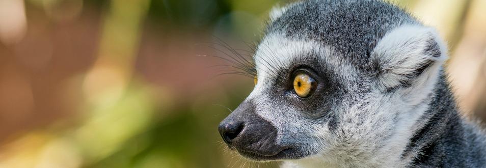 מדגסקר - המדריך המלא לטיול למדגסקר
