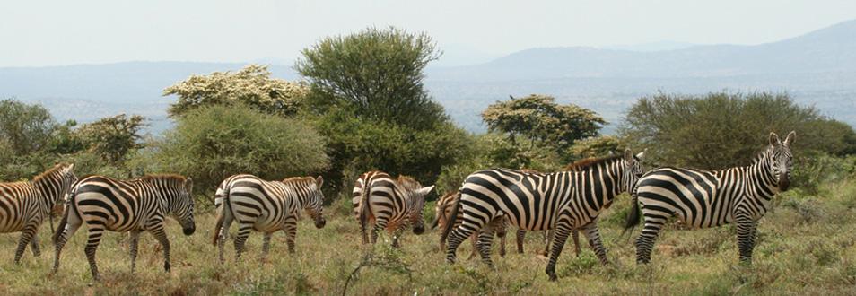 קניה - המדריך המלא לטיול לקניה