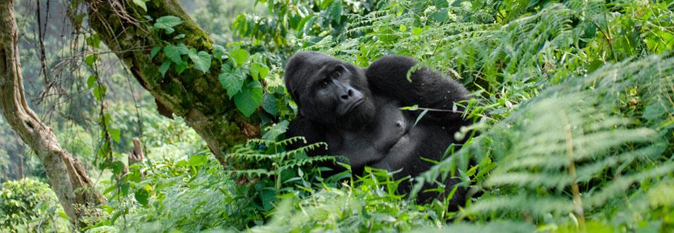 רואנדה - המדריך המלא לטיול לרואנדה