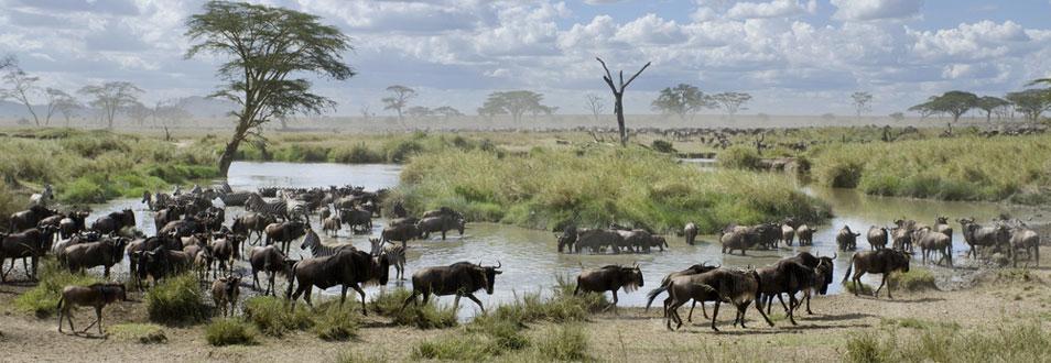 טנזניה - המדריך המלא לטיול לטנזניה