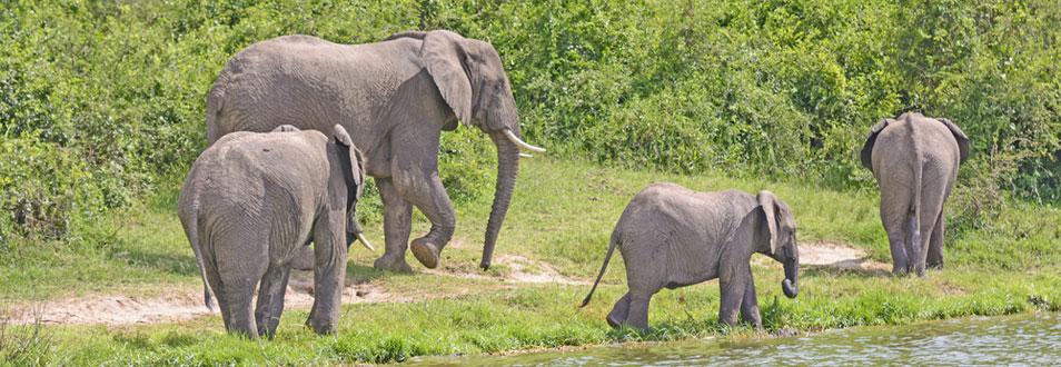אוגנדה - המדריך המלא לטיול לאוגנדה