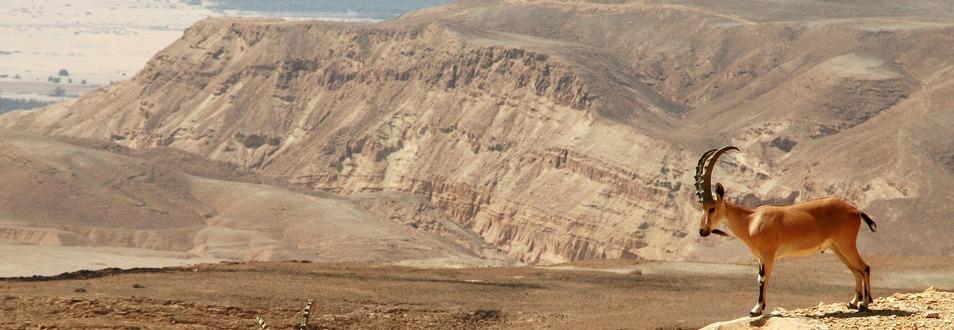 הר הנגב - המדריך המלא לטיול להר הנגב