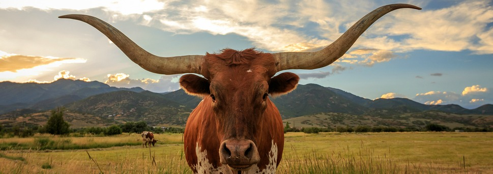 טקסס - המדריך המלא לטיול לטקסס