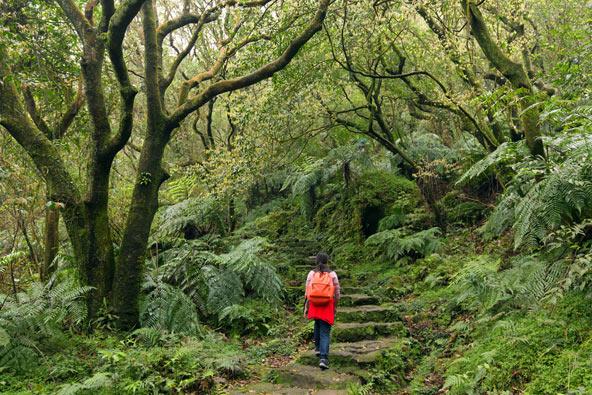 שביל הליכה ביער בשמורת יאנגמינגשאן, הנמצאת בפאתי העיר טייפה
