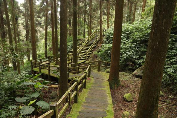 שביל הליכה במעבה היער בשמורת אלישאן