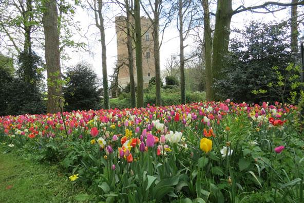 אביב בבריסל – עיצוב, פריחות ושוקולד