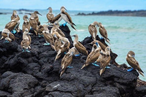 דברים שלא תרצו להחמיץ באיי גלפגוס