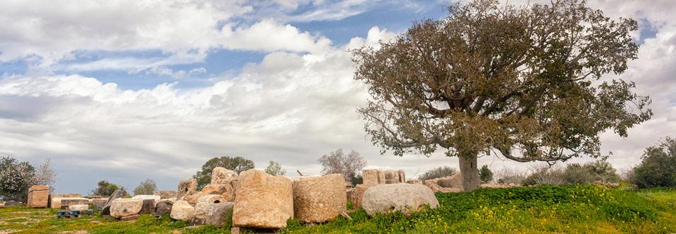 שפלת יהודה ומישור החוף הדרומי - המדריך המלא לטיול לשפלת יהודה ומישור החוף הדרומי