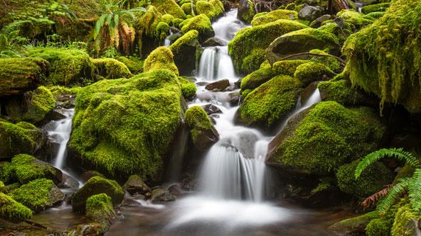 הודות ללחות הגבוהה ולטמפרטורה הנוחה, קרקעית היער מרופדת בשיחים ושרכים