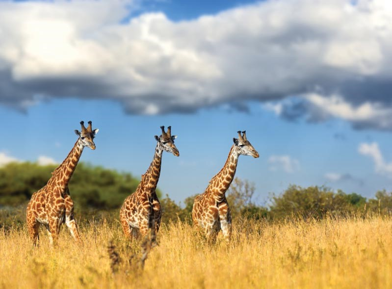 טיול לדרום אפריקה ומפלי ויקטוריה