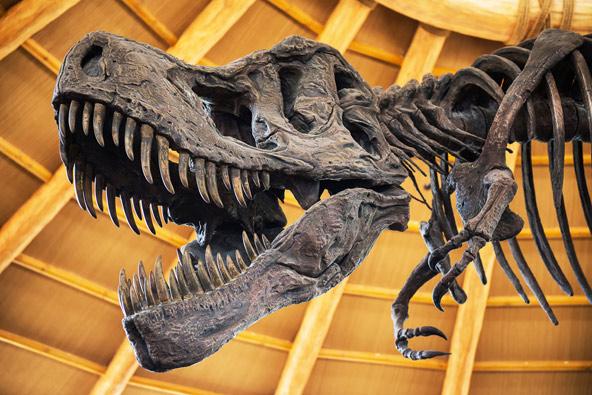 בעקבות הדינוזאורים: מפגשים עם ענקים שנכחדו