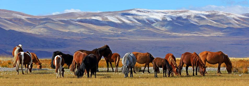 מונגוליה - המדריך המלא לטיול למונגוליה
