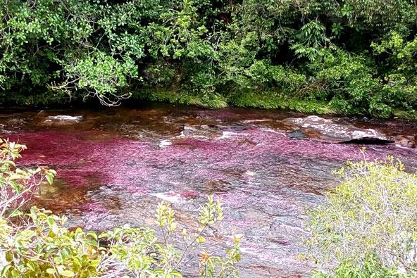 קאנו קריסטלס – הנהר הצבעוני בקולומביה