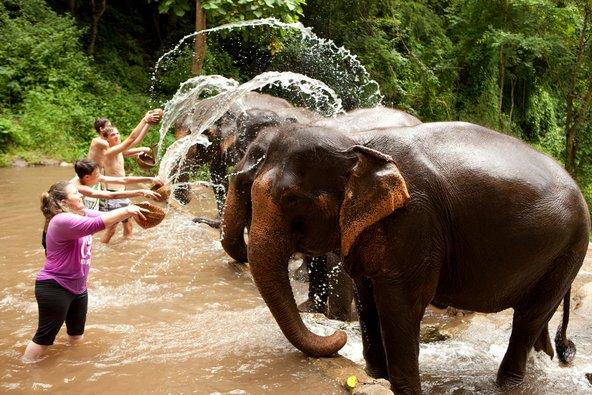 תיירים רוחצים בפילים באחת מהחוות בצפון תאילנד | צילום: phloxii / Shutterstock.com