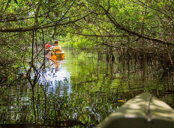 שייט בביצות אברגליידס בפלורידה