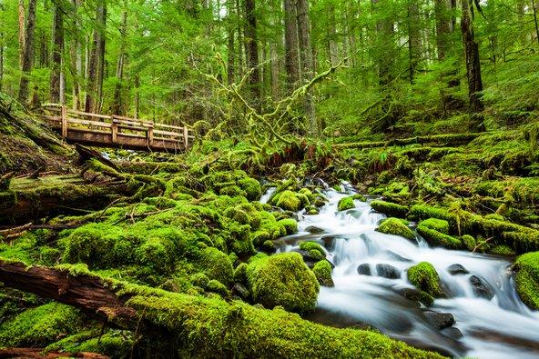 יער הגשם שבו עצי אשוח, אשוחית וארזים המכוסים טחב, שביניהם שרכים ופלגי מים, נראה כאילו נלקח מסיפור אגדה