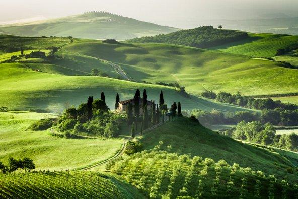 בית חווה מוקף כרמים ומטעי זיתים בטוסקנה. איטליה היא מקום נהדר לחופשה שמשלבת טעימות יין ומסיק זיתים | צילום: Shaiith / Shutterstock.com