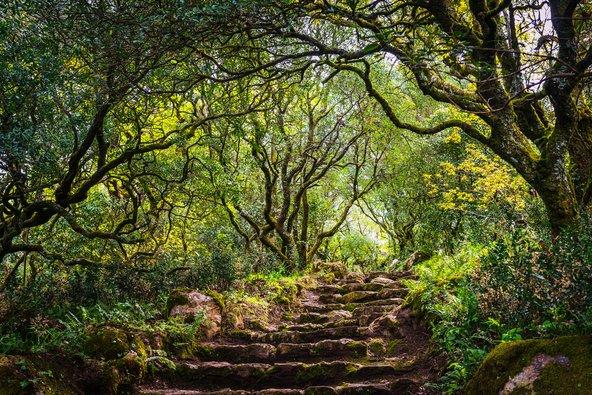 יער בוסאקו. עתיק ואפוף מסתורין